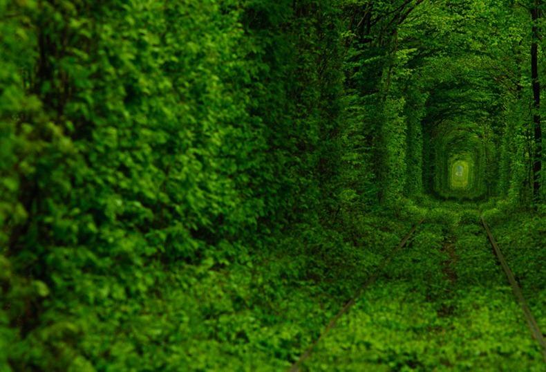الأشجار تعبر القطارات